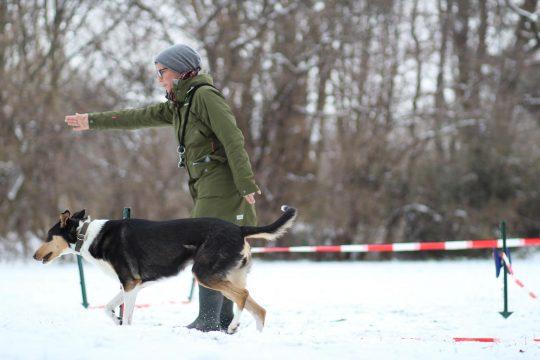 Hundetraining Longieren