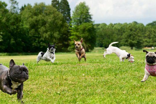 Spielstunde Junghunde