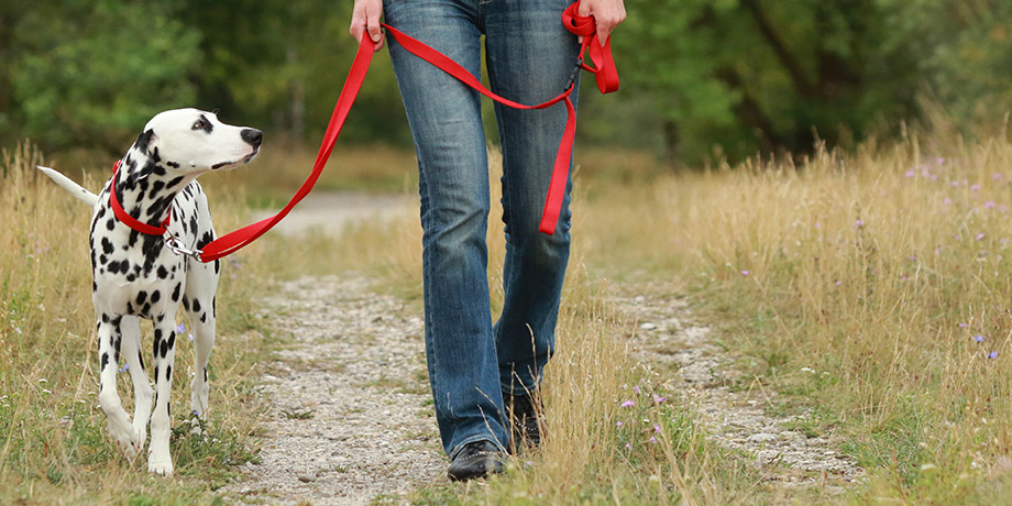 Hundeerziehung Hundebeschäftigung